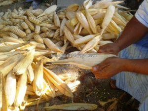 Hoja de maíz para tamal